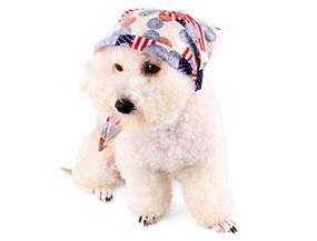 Pet Neck Scarf Cotton Print Bow Tie Headband Ecru White Dog Bib